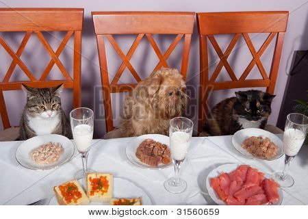 Feast For The Animals