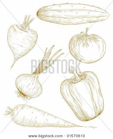 Vector Illustration Vegetables.