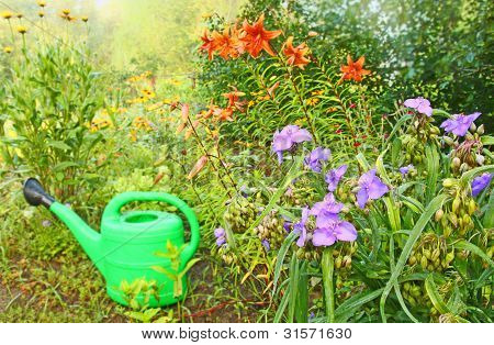 Green Watering Can On A Background of A Flowerbed