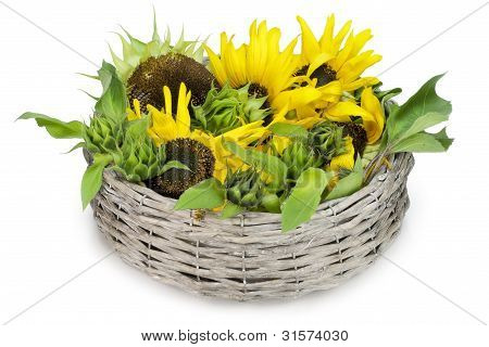 Sunflower Lies In A Basket