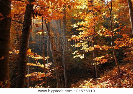 Forest at autumn
