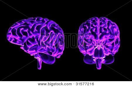 Brain Front And Side