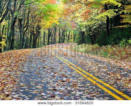 Country Road In The Rain At Peak Fall Season