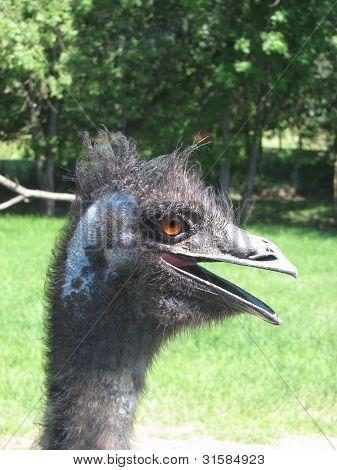 Large bird Reah