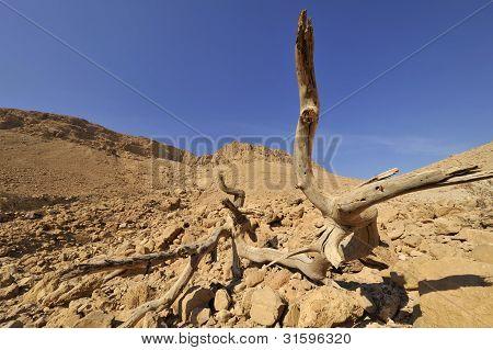 Judea Desert, Israel.