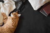 Ginger Cat Sleeping poster