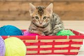 Little Bengal Bengal Kitten With Balls Of Thread In A Wicker Basket poster