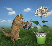 The Cat Gardener Waters A Money Tree In A Pot With An Iron Watering Can On The Meadow. poster