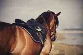 Saddle With Stirrups On A Back Of A Stallion. The Back Of A Saddled Red Horse. Equestrian Sport. Dre poster