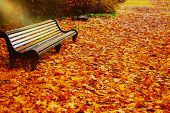 Empty Bench In Autumn Park On Fall Leaves Background. Park Bench On Autumn Alley Strewn With Fall Ma poster