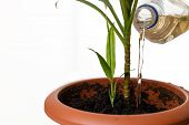 Bottle Are Watering The Green Plants In The Brown Flower Pot On The White Background. There Is Plant poster