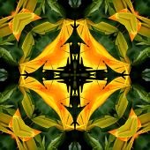 Seamless Symmetrical Pattern Abstract Banana Leaves Texture poster