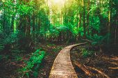 Beautiful Rainforest Jungle In Tasmania, Australia poster