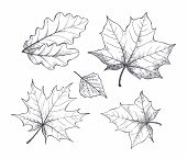 Fall Autumn Season Leaves, Monochrome Sketches Outline Isolated Icons Set Vector. Foliage Of Differe poster