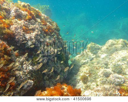 Fish And Rock