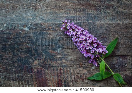 Lilac Over Wooden Background