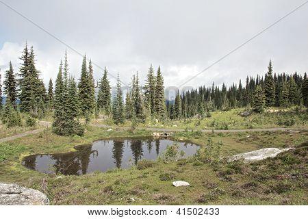 Pond On The Mountain