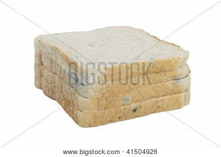 Rotten whole grain wheat bread with green mold