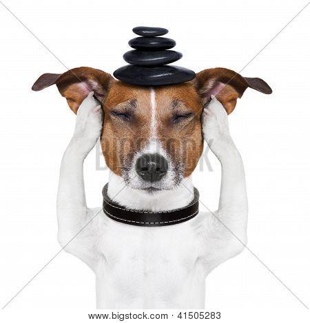 Dog Meditation