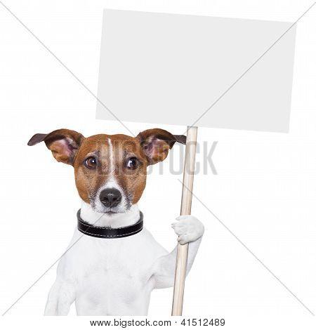 Banner cão