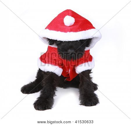 Black Russian Terrier Puppy Dog Santa on White Background