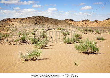 Soledad en el desierto