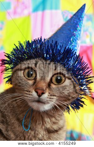 The Become Stupid Cat In A Celebratory Cap