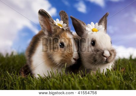 Easter, bunny white blue sky background