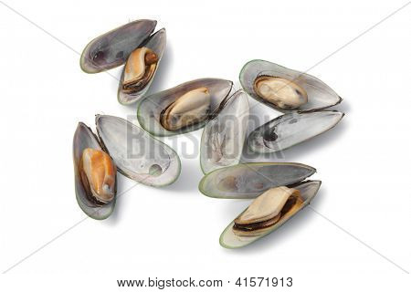 Fresh cooked Green lipped mussels from New Zealand