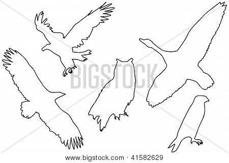 Black Silhouettes Of Birds