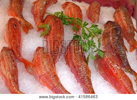 Fresh Fish On Ice For Sale