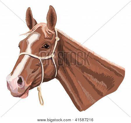 cabeça de cavalo com halter
