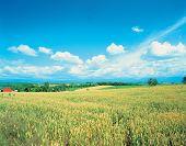 Sky Plains poster