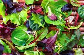 image of romaine lettuce  - Close up of a variety of salad greens - JPG