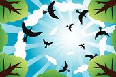 Sunny Sky With Birds And Clouds poster