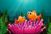 foto of clown fish  - Illustration of two fishes above a pink coral found underwater - JPG