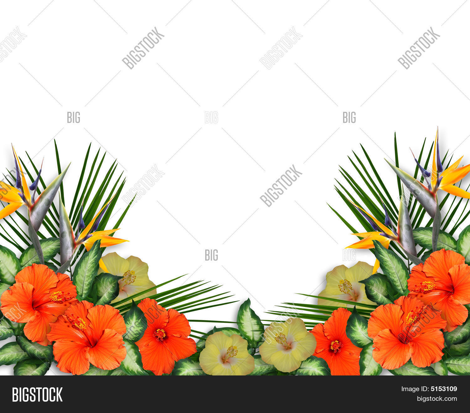 tropical flowers border image & photo | bigstock, Modern powerpoint