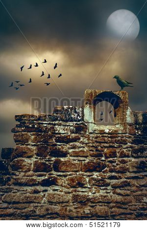 Jackdaw sitting on the wall of a ruined abbey