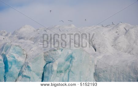 Seagulls Flying Above The Glacier