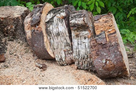 Pile Of Wooden Chumps After Cutting