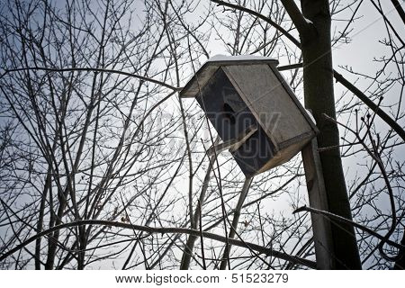 Old Tilted Starling-house On A Tree In City Park