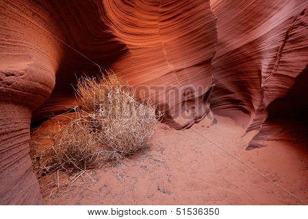 Tumbleweeds In A Corner