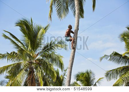 Coconut Man