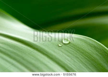 Crystalline Drops On Leaf