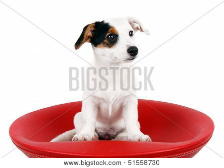 Cute Jack Russell Sitting On A Red Stool