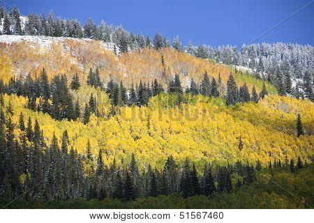 Aspen Grove After Snow