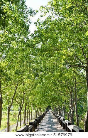 Tree lined rural lane, shot at Luodong Forestry Culture Garden, Yilan county, Taiwan.