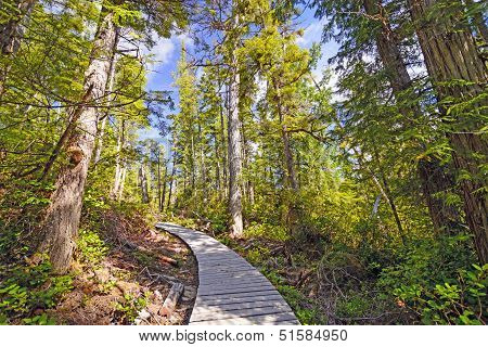 Shaded Trail In A Coastal Forest