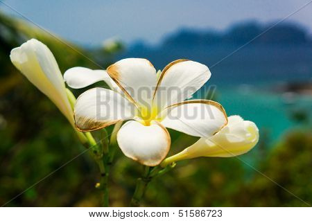 Tropical Verdure Idyllic Blossom