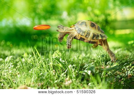 Turtle catches the frisbee